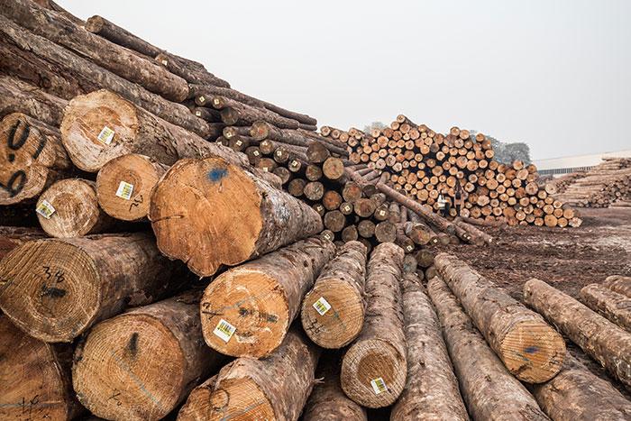 新鲜木材想不发霉,就用木材全面防霉方案-抗菌剂/防霉剂/干燥剂/防霉片厂家批发